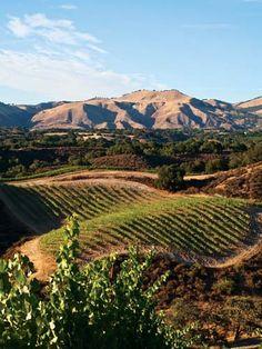 Demetria Estate Winery, Santa Ynez Valley, Los Olivos, Santa Barbara, California