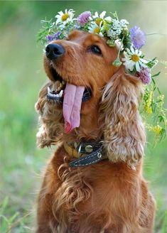 Flower setter dog!
