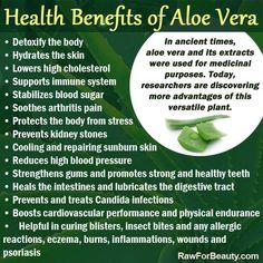 ∆ Aloe Vera...Health Benefits of Aloe Vera