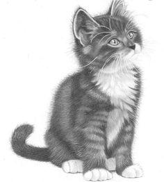 Kleurplaten Realistische Dieren 434 Beste Afbeeldingen Van Hond Poes Coloring Pages
