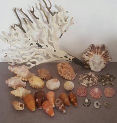 Sea Shells & rare sea grass from Jeffreys Bay (cleaned handpicked) beach, driftwood, fish aqarium in the Other Antiques & Collectables category was listed for on 27 Dec at by Hanli Delport in Jeffreys Bay Driftwood Fish, Sea Shells, Grass, Cleaning, Beach, The Beach, Seashells, Grasses, Beaches