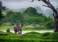 Cheap and Affordable Honeymoon Destinations: Sri Lanka