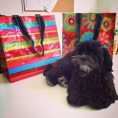 Piper's having a lazy Friday at the office! http://instagram.com/p/pe-6SnsIK3/