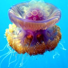 Bubble, bubble, bubble! Looks like this Jelly fish has some bubbles on the top, Millie!