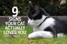 9 Signs Your Cat ACTUALLY Loves You! <3