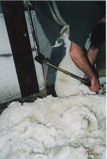 "Cashmere shearing. Corindhap, Australia.The annual world clip is estimated to be between 15,000 and 20,000 tons (13,605 and 18,140 tonnes) (hair in). ""Pure cashmere"", resulting from removing animal grease, dirt and coarse hairs from the fleece, is estimated at about 6,500 tons (5,895 tonnes). It is estimated that on average yearly production per goat is 150 grams (about 1/3 lb)."
