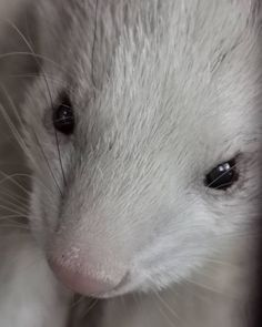 Ferret, Age, Healthy, Happy, Instagram, Ferrets, Ser Feliz, Health, European Polecat