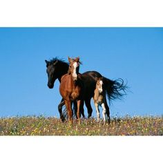 National Geographic Wild Horses Wall Mural - NG94616