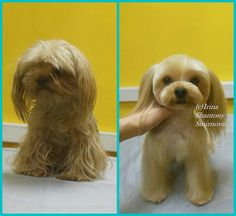 -repinned- Before & after grooming