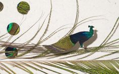 Peacock Attraction detail