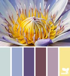 A repin of a color palette that includes cornflower yellow, blue, purple, brown and aqua colors
