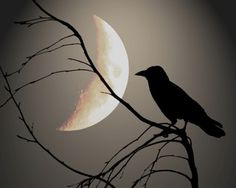 ✯ Raven Silhouette in the Moonlight .. By  Mitternacht ✯