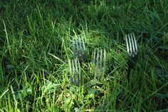 Fourchettes sauvages - Venir Voir Vaincre