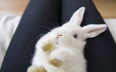 10 razze conigli: pucciosità e informazioni tecniche sui conigli più carini del pianeta. Coniglio nano, ariete, ermellino...e molti altri!