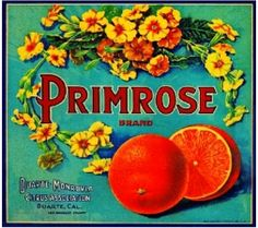 Vintage Crate Labels - Primrose Brand Oranges