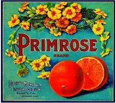 Vintage Crate Labels - Primrose Brand Oranges