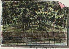 Oleśnica na prawym brzegu potoku Olesnickiego Vineyard, Outdoor, Outdoors, Vine Yard, Vineyard Vines, Outdoor Games, The Great Outdoors
