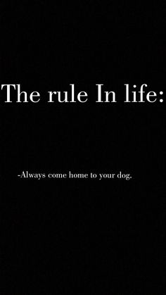 Related Klischees über Hundeleute, die absolut wahr sind - Funny and Cute Dogs - unglaublich riesige Hunde, die Dich gerne umwerfen wollenTUESDAY I Love Dogs, Puppy Love, Cute Dogs, Dog Rules, Dogs And Puppies, Doggies, Animal Quotes, Dog Grooming, Grooming Shop