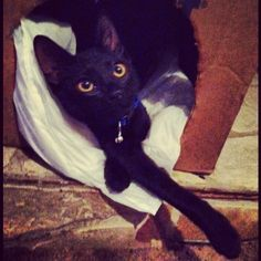 Another of my very favorite pics #black #cat # kitten #kitty #babyboy #blackcat #blackkitty #blackkitten #yelloweyes