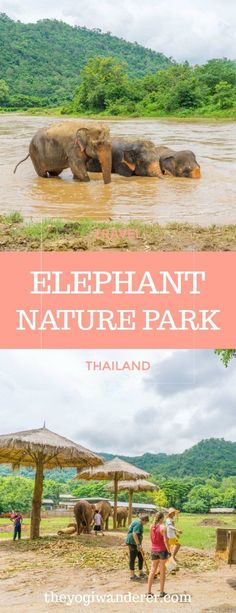 The truth about riding an elephant in Thailand, and an ethical alternative: Elephant Nature Park, in Chiang Mai #SaveTheElephants #Thailand #Asia