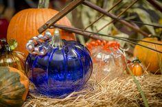 Experience the Glass Pumpkin Patch at the Corning Museum of Glass Shops. #cmogshops #glass #pumpkins #decor #fall