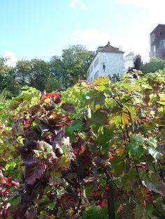 Visites des vignes du Clos Montmartre (Paris 18e) http://www.pariscotejardin.fr/2014/10/visites-des-vignes-du-clos-montmartre-paris-18e/