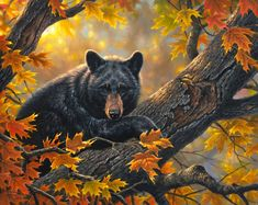 """Abraham Hunter Limited Edition Embellished Canvas Giclee:""""Hangin' Out"""" b>Artist: Abraham Hunter Title: Tidings of Comfort and Joy Edition Size: Artist Signed and Numbered Limited Edition. Bear Paintings, Wildlife Paintings, Wildlife Art, Photo Ours, Art D'ours, Hunter Page, Vida Animal, American Black Bear, Bear Drawing"""