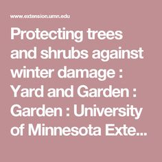 Protecting trees and shrubs against winter damage : Yard and Garden : Garden : University of Minnesota Extension