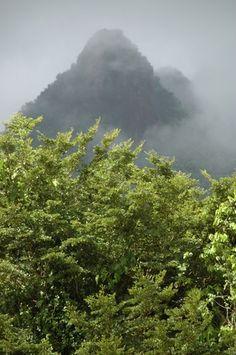 El Yunque, the Rain Forest Puerto Rico. //Otro lugar donde visitábamos con regularidad.  Cuando mis padres se casaron habían una cabañas que se alquilaban y ahí pasaron su Luna de Miel.. ya no habían las cabañas, pero el día se desenvolvía con gran emoción y acción...las charcas, los laberintos, el olor a tierra húmeda, la neblina, los pájaros y el sonido del viento. Yo soy de la montaña y la prefiero a la playa. EBR//