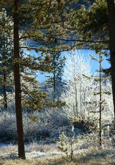 Kaunista, aurinkoista ja -15 C. Lappi 22.10.14 Lapland October 22. 2014  https://www.facebook.com/173696896121402/photos/a.173792659445159.1073741828.173696896121402/371534633004293/?type=1&theater #luonto #nature #Lappi #Lapland