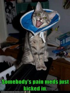just too funny http://sulia.com/channel/cats/f/6702b300-06d4-4620-8b11-ac2c20733d8e/?pinner=119866023