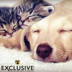 The exceptional ingredients in #Exclusive® Pet Food were chosen to give your #Furry loved one what they've always liked and needed. The #1 ingredient in Exclusive® #PetFood is savory, real meat including, chicken, turkey or fish. They have also added a carefully-selected balance of fruits, vegetables and wholesome grains to support their health, but left out the corn, soy, wheat, artificial flavors and preservatives. We are proud to offer you and your loved ones quality brands like…