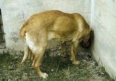 Quand votre chien ou votre chat agit de la sorte, rendez-vous dans les plus brefs délais chez un vétérinaire. Vous pourriez lui sauver la vie.