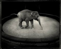by Sarah Moon BTW I adore elephants! <3