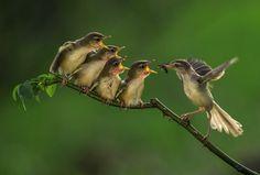 Птенцы во время кормления в Джакарте, Индонезия
