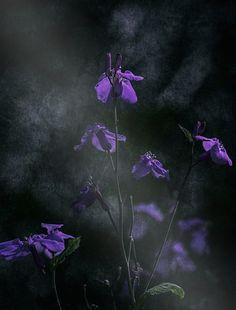 Which Blooms Quietly by Takashi Suzuki