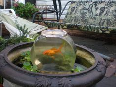 Watch tower for goldfish gardens and fish ponds for Pond in a pot with fish