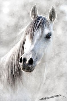 Beautiful Arabian With an Inquisitive Look. Majestic Horse, Beautiful Horses, Animals Beautiful, Horse Riding Quotes, Horse Drawings, White Horses, Equine Art, Equine Photography, Horse Pictures