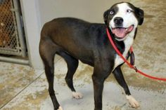 PLEASE ADOPT!!  OUT OF TIME!Mercedes: 'Did not want' ends with sweet dog out of time at high-kill shelter
