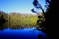 Lake Chisholm with Blue Sky Reflection, Tarkine Wilderness, #Tasmania #Australia More: http://southernson.com/tasmania/tarkine-wilderness/index.html | The Tarkine Wilderness is threatened. Protest on Pinterest: pinterest.com/tarkine #SaveTarkine