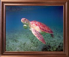 Framed Art measures 18x22 inches, Art Print measures 16x20 inches. Solid Wood Frame, Real Glass Front. Custom Finished and Professionally framed in California, USA Frame has Hardware attached & arrives Ready to Hang out of the box BRAND NEW in MINT condition