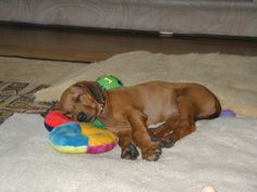 Baby puppy Sekai