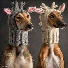 adorable knitted dog hoods but I don't think my dog would ever go for it.