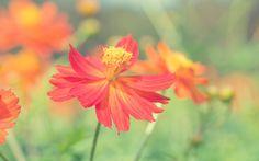 природа, цветы, лепестки