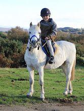 lovely white pony.