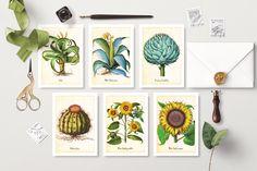 Botanical Print Set of 6 Printable Postcards, Printable Cards, Printable Wall Art, Fruit Illustration, Botanical Illustration, Sunflower Art, Vintage Botanical Prints, Fine Art Paper, Art Cards