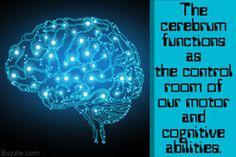 Function of cerebrum