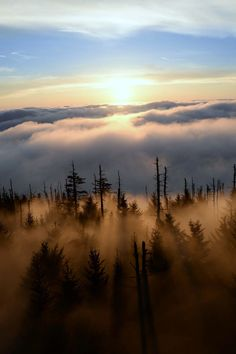 expressions-of-nature:clingmans dome sunrise by: Melissa Berrios
