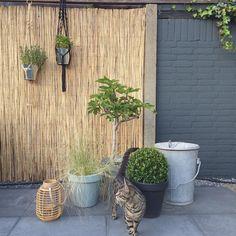 Onze achtertuin, steeds meer af :-) #kijkjeindetuin #tuin #garden #gardenlife #vijgenboom #xenos #outdoor #buitenleven #nieuwetuin