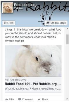 Pet Rabbit Names - The Best Pet Rabbit Names - Rabbit Name Generator - PetRabbits.org Rabbit Eating, Rabbit Food, Pet Rabbit, Rabbit Names, Bunny Names, Indoor Rabbit, Name Generator, Good Things, Pets